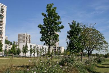 Quartier de Caucriauville au Havre