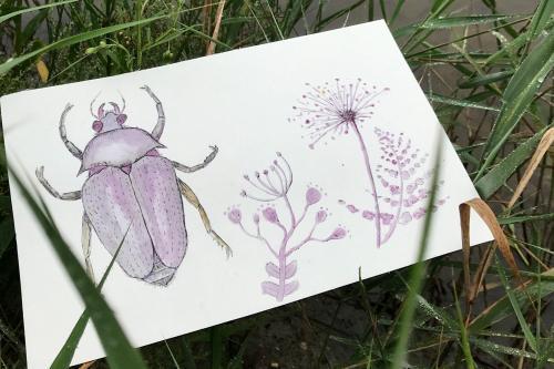 Dessin d'insecte posé dans des herbes hautes